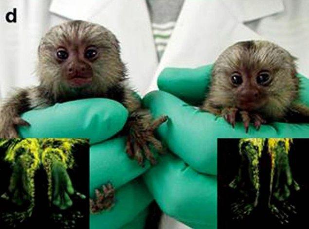 scimmiette_fluorescenti