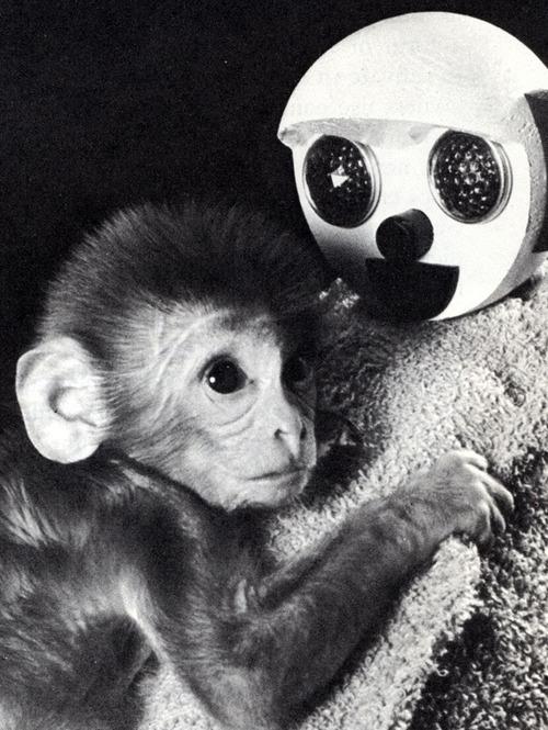 scimmiadelfuturo